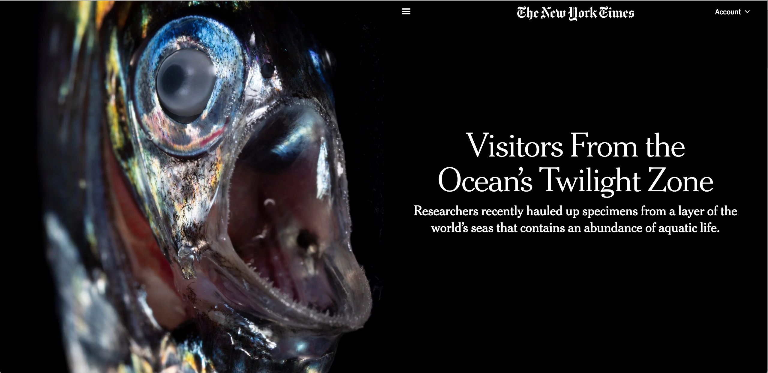 The New York Times: Visitors from the Ocean's Twilight Zone