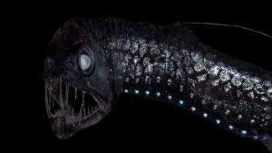 Sloan viper fish