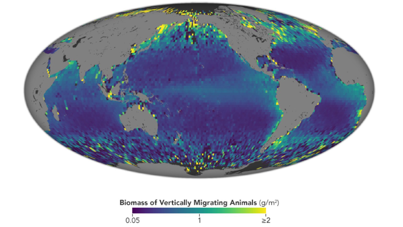 Satellite Observes Massive Ocean Migration