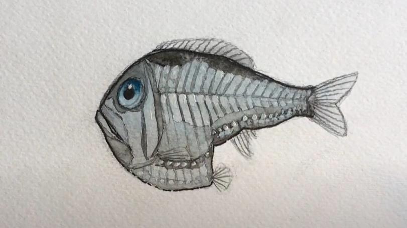 Hatchetfish - art tutorial