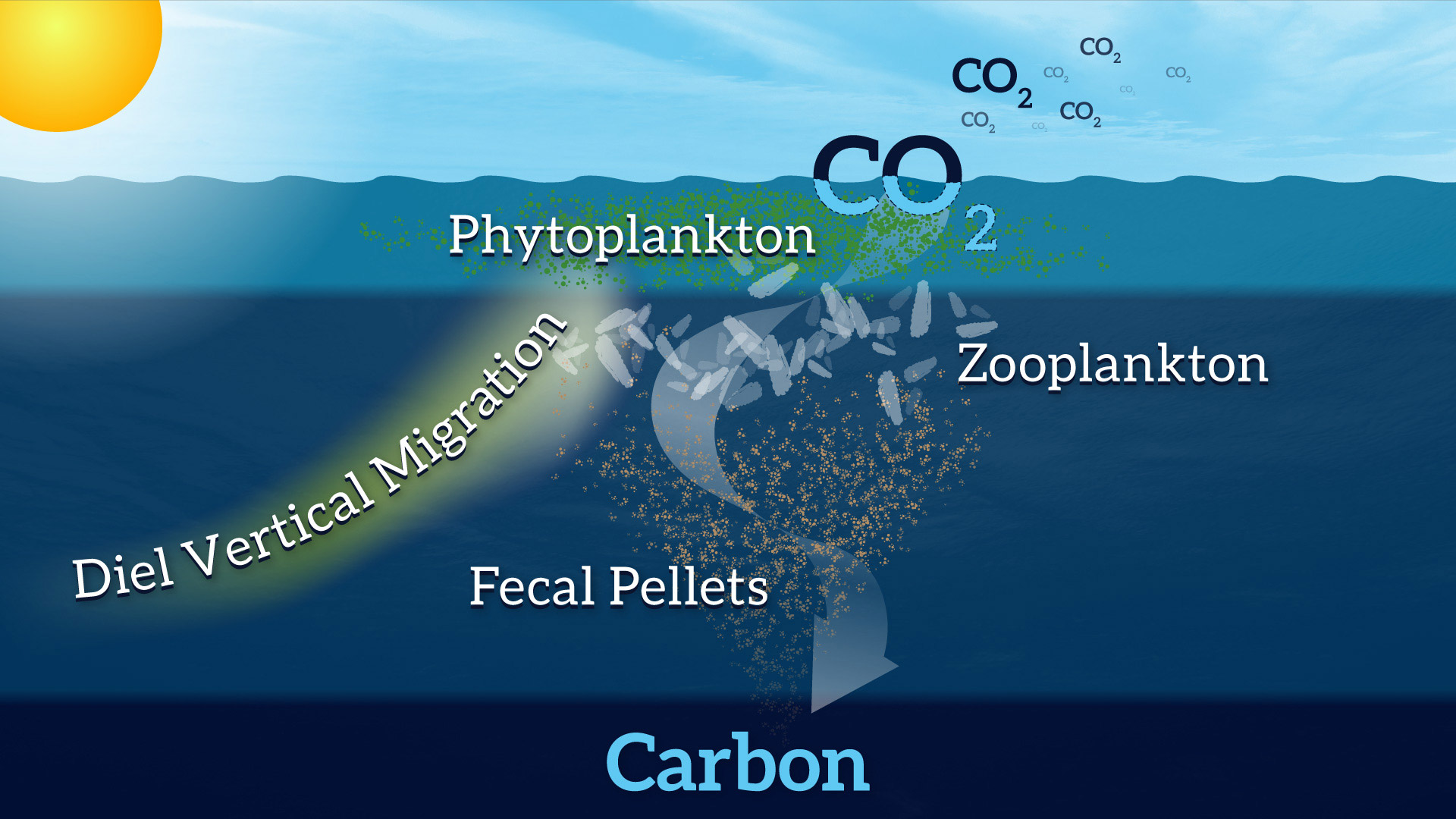 Copy-of-Biological-Carbon-Pump