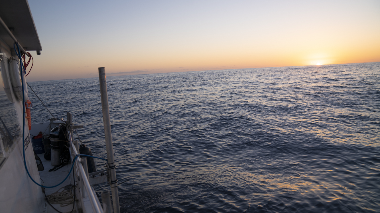 As the Sun dips low in the sky, evening hues of orange and yellow paint the horizon. Deep below the ocean's surface, millions of organisms are beginning their nightly migration from the twilight zone up to shallower waters. (Photo: Jennifer Berglund