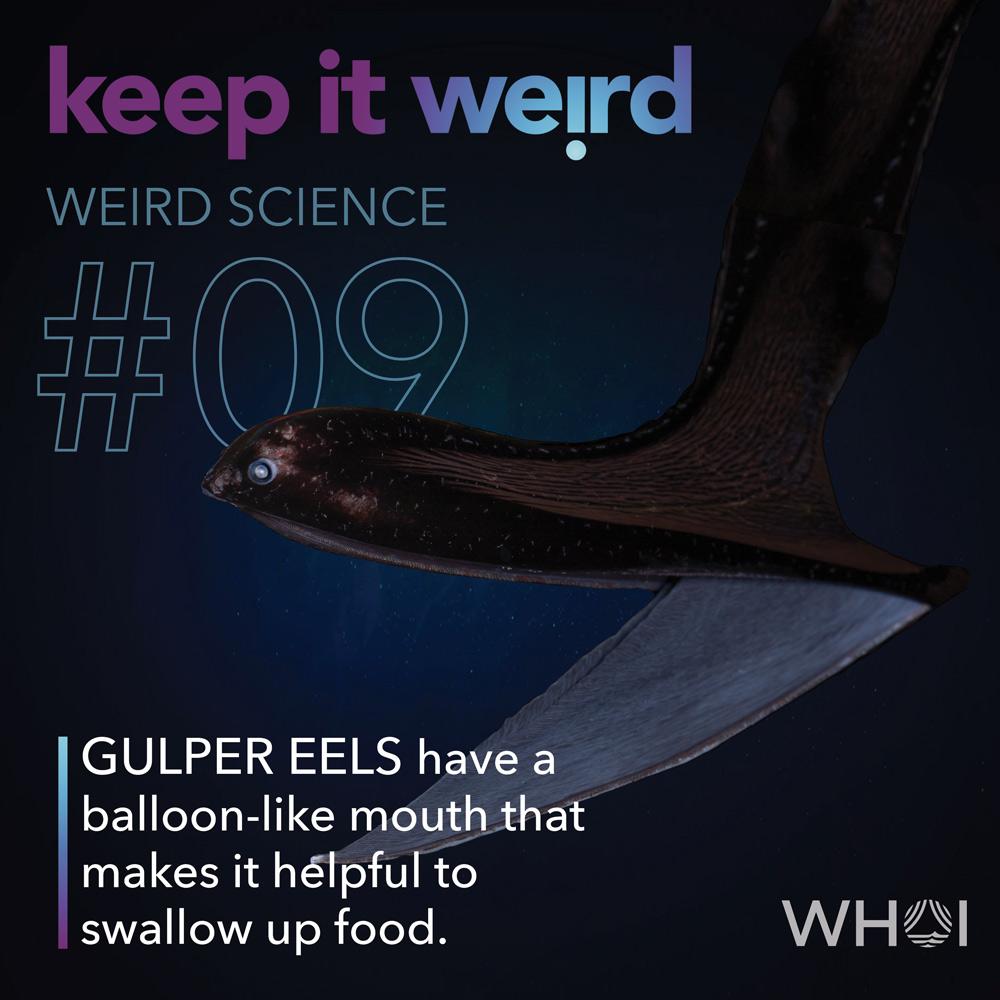 KIW_Weird-Science_9-Gulper