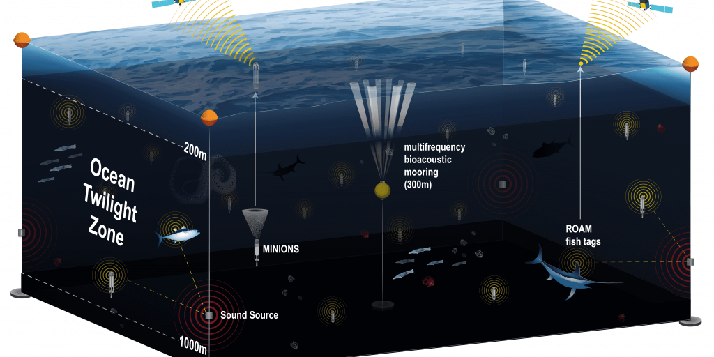 A new observation network will give scientists a comprehensive view of the twilight zone, or mesopelagic. It will use several different technologies including moored buoys equipped with acoustic survey systems; a swarm of optical and geochemical sensors; and new fish-tracking tags that will continuously record the position of major predators such as sharks and tuna. All of these components will connect to the network's buoys using acoustic signals underwater and an Iridium satellite link at the surface.