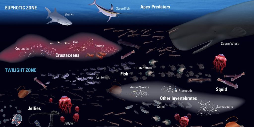 Mesopelagic-Food-Web