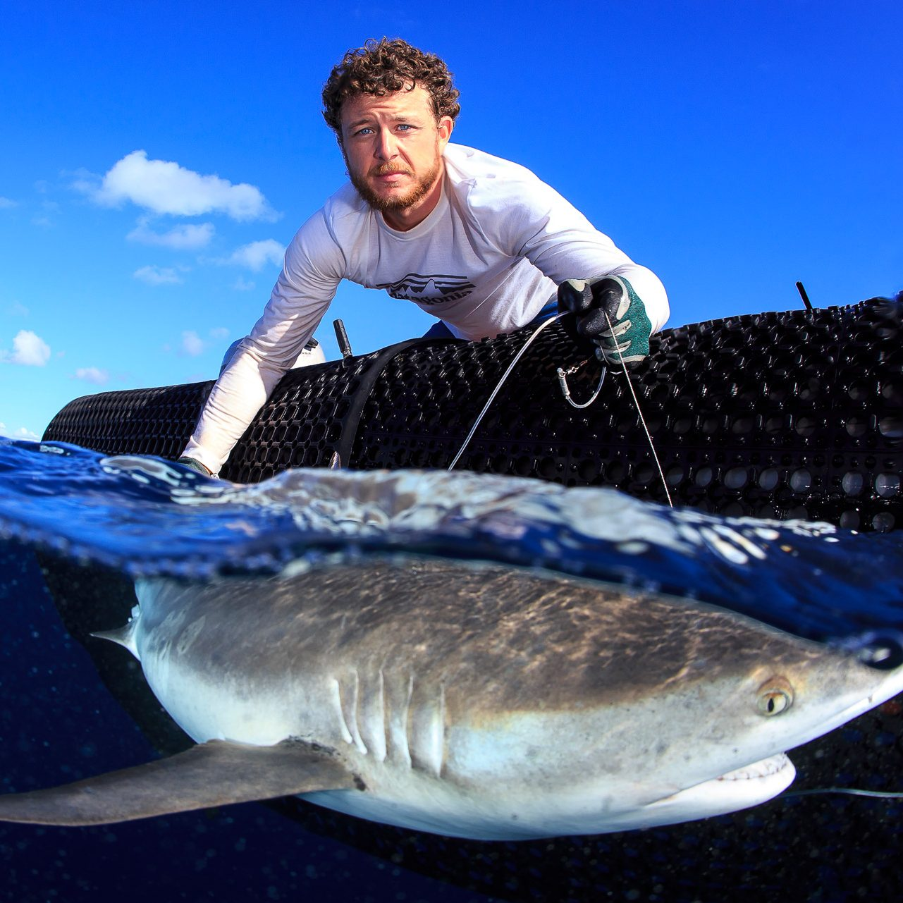 researcher on a small boat holding a shark underwater